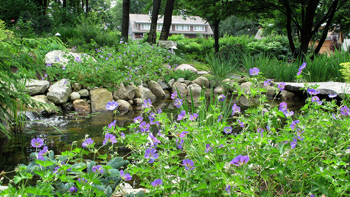 The Lower Pond Bursts into Bloom in Early Summer