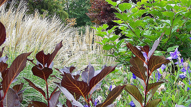 A Mixed Planting Includes Perennials, Grasses, And Shrubs