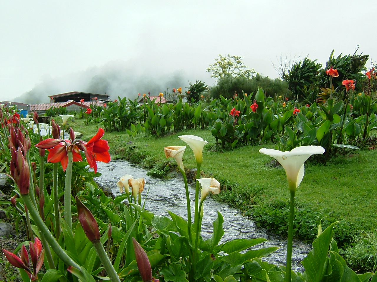 A Cloud Rainforest Garden